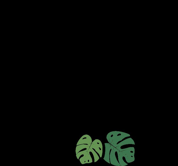 De Raiz Plantas