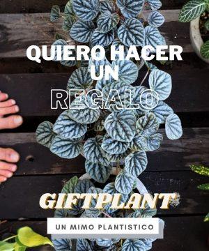 Giftplant
