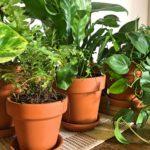 Macetas-con-planta-scaled (1)